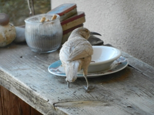 Whitey dining on worms.  © Norine Dresser, 2013.  All rights reserved.