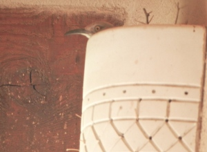 Whitey at top left corner of patio wall sconce.  © Norine Dresser, 2013.  All rights reserved.