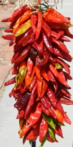 Ristra from the new crop of Hatch chiles.  © Norine Dresser photo collection, 2013