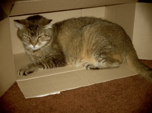 Box of Tommy.  © Norine Dresser photo collection, 2014.
