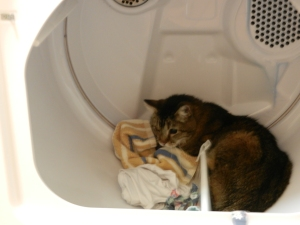 Tommy in dryer (about to become an urban legend).  © Norine Dresser photo collection, 2014