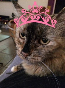 Princess Tuga.  Crown photo shopped by Mariah Chase.  © Norine Dresser photo collection, 2014.