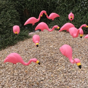 The flamingos have migrated to my backyard. © Norine Dresser photo collection, 2015.